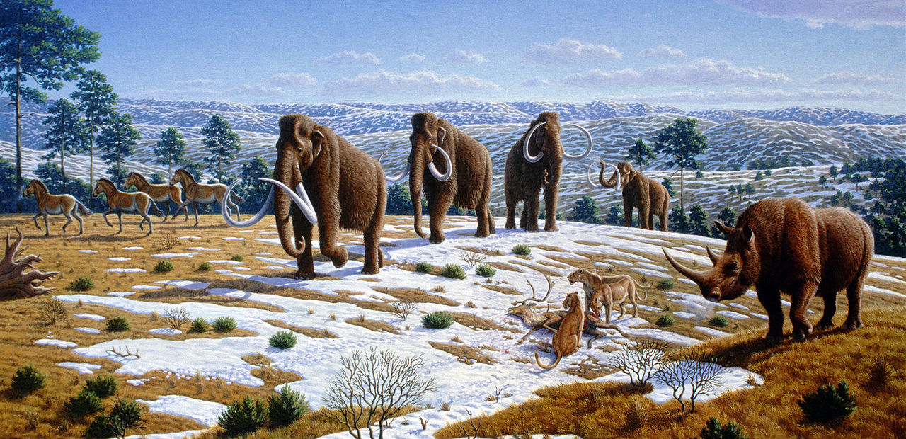 """By Mauricio Antón - from Caitlin Sedwick (1 April 2008). """"What Killed the Woolly Mammoth?"""". PLoS Biology 6 (4): e99. DOI:10.1371/journal.pbio.0060099., CC BY 2.5, https://commons.wikimedia.org/w/index.php?curid=11781070"""