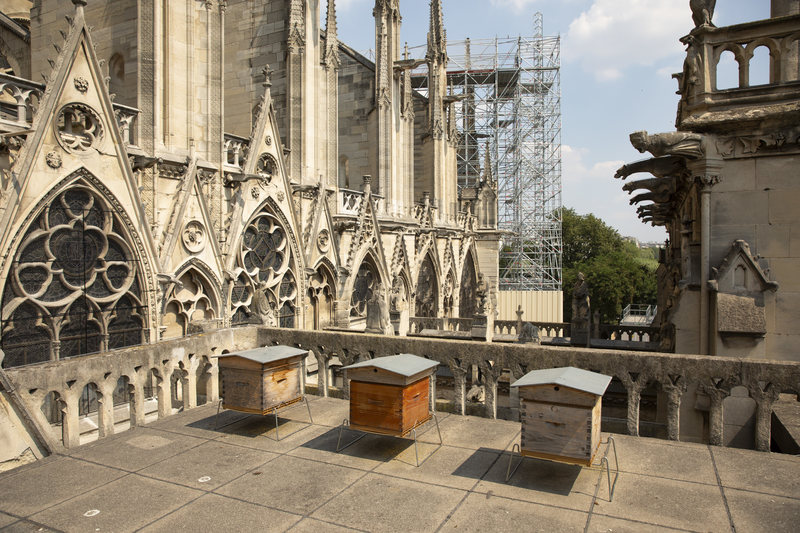 The beekeeper Nicolas Geant settled three hives on the roof of the sacristy of Notre Dame.  via CNN
