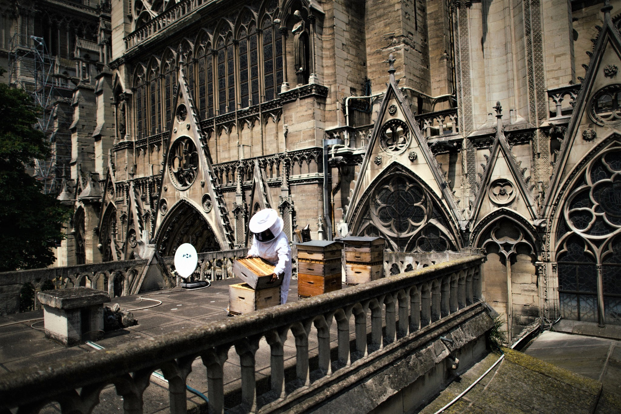 Sibyle Moulin, a beekeeper, tending to hives on the roof of Notre-Dame. Image: Dmitry Kostyukov for The New York Times