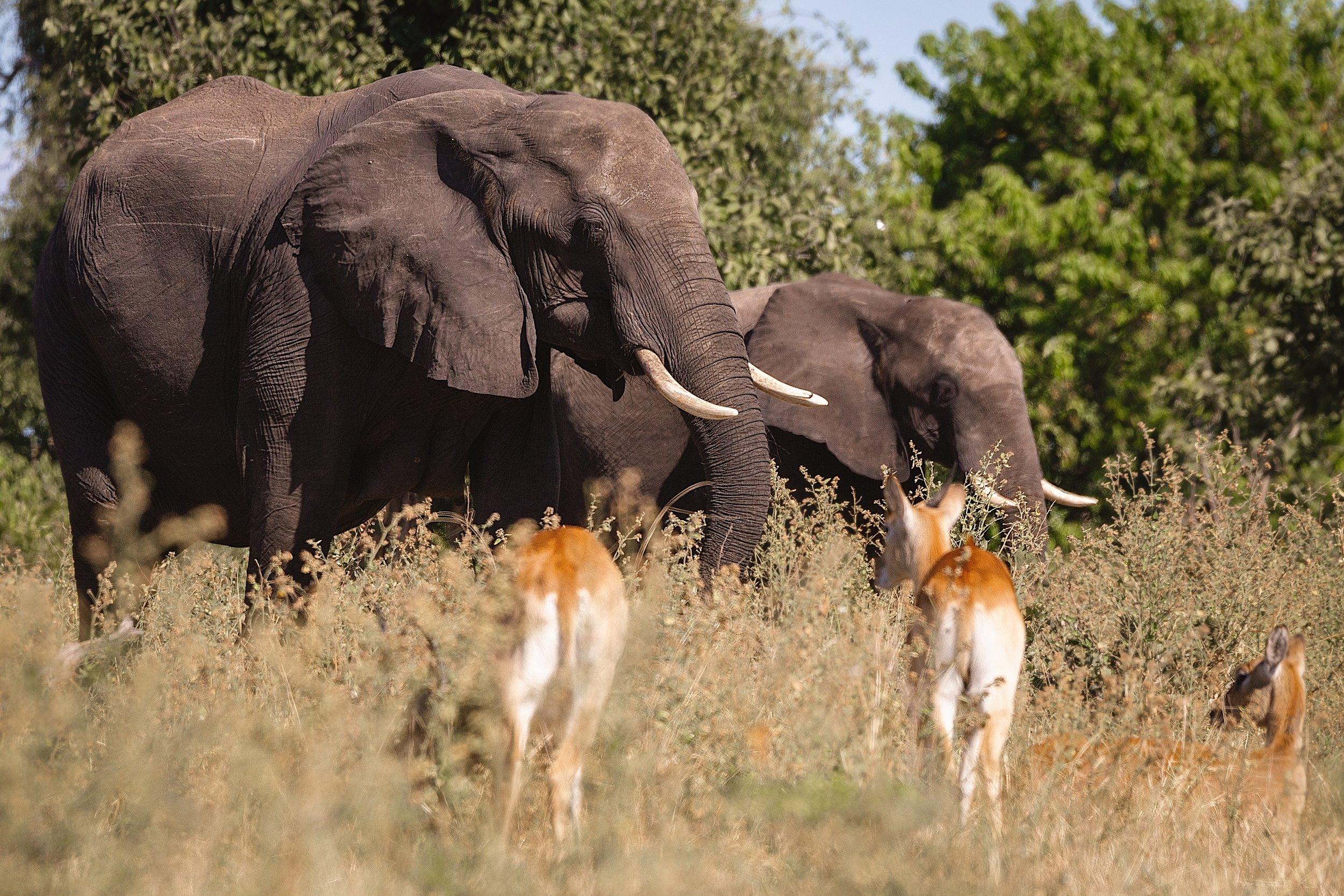 Elephants in Chobe National Park, Botswana. Photo by  Sander Wehkamp  on  Unsplash