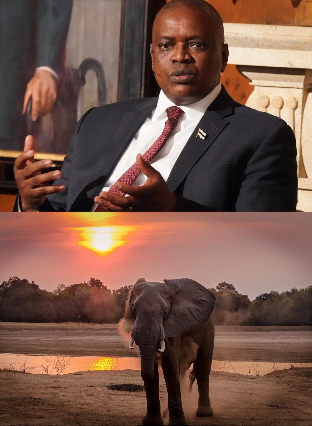 President Mokgweetsi Masisi,bring back elephant hunting in Botswana.