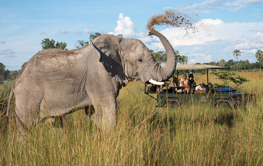 An elephant in the redesigned Jao Camp, in Botswana Image via  African Wildlife Safaris Australia.