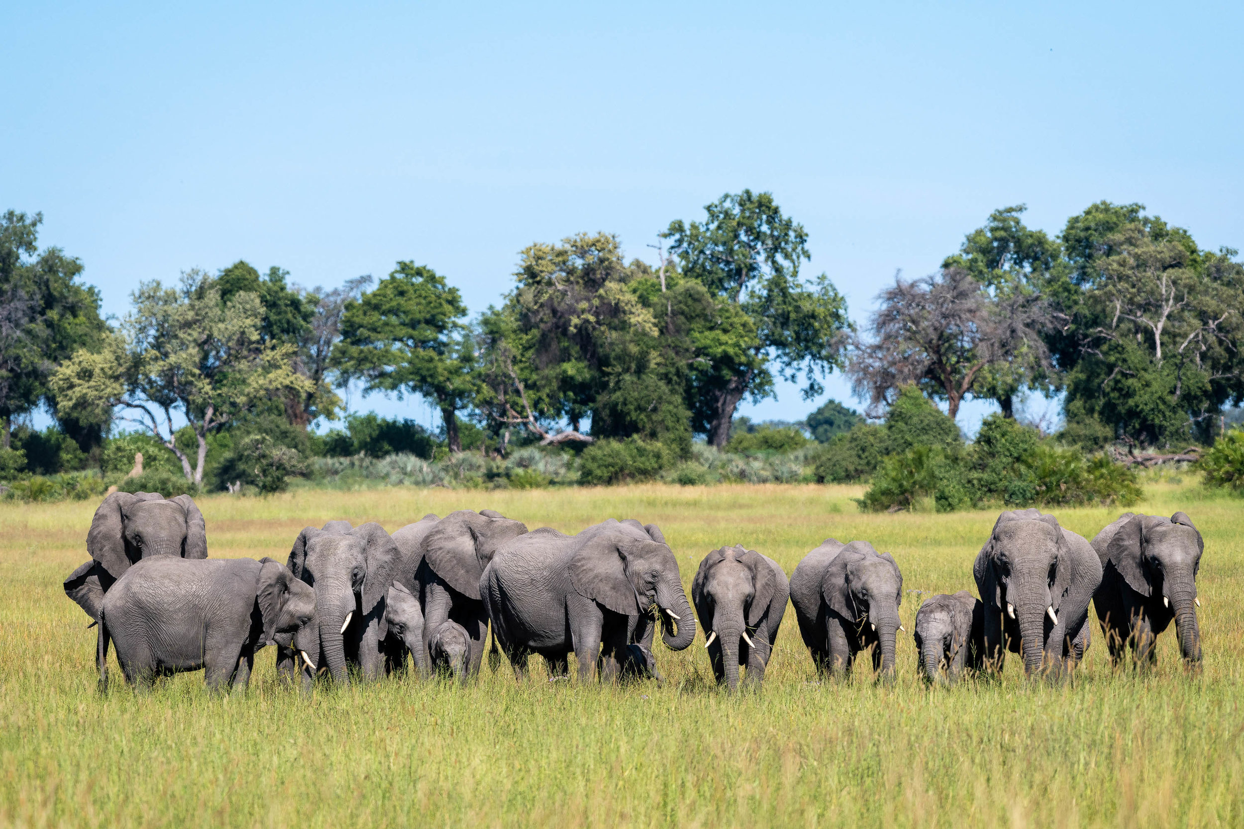 Elephants at Jao Camp, Botswana. Image via  LVCreation.com
