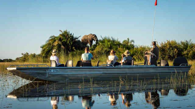 Elephant at Jao Camp in Botswana-4.jpg