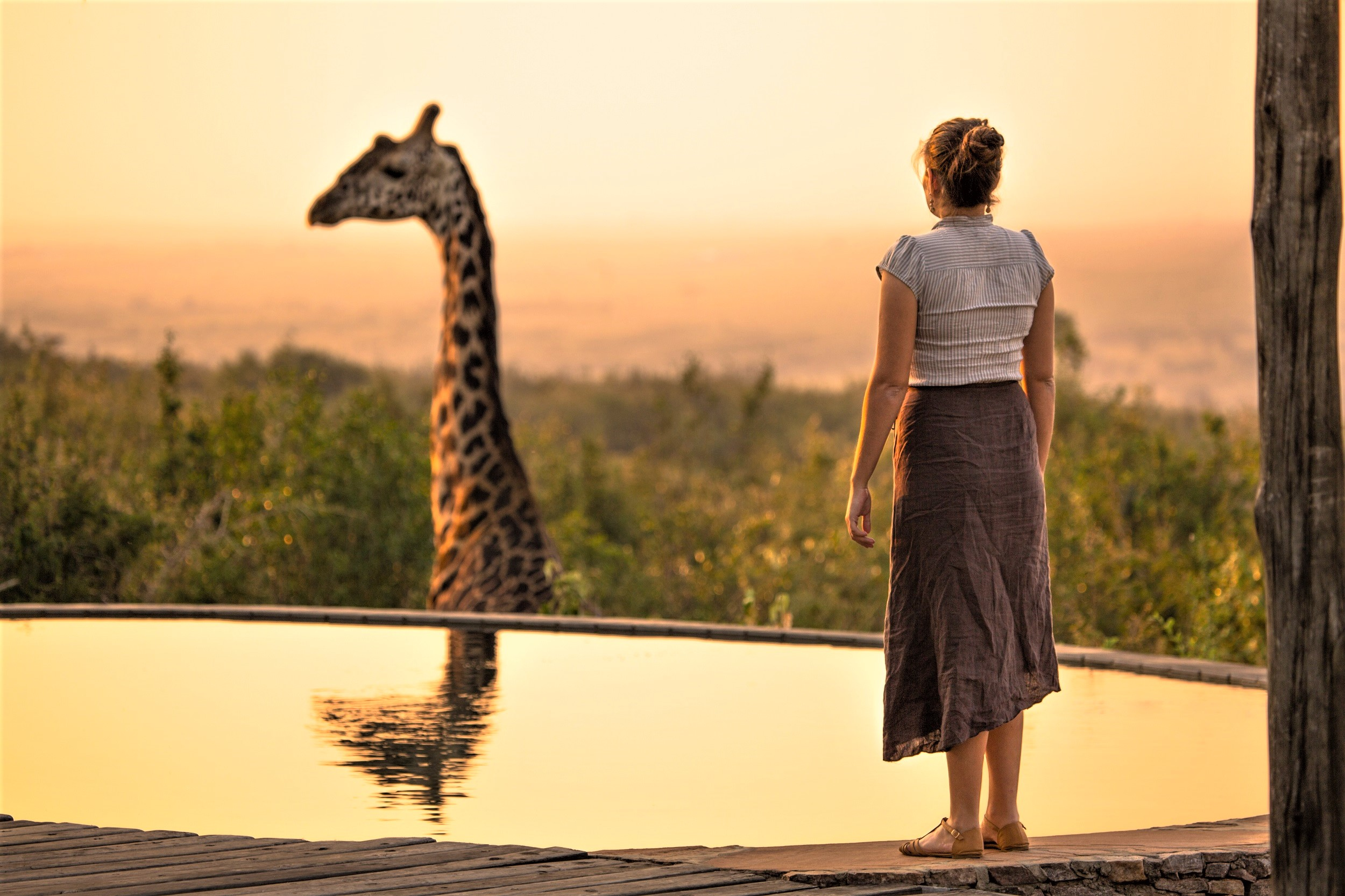 Photo taken at Mara Bushtops in Masai Mara, Kenya. Mara Bushtops conserves a large amount of land outside the national reserve which has resulted in wildlife population increases. This Giraffe, Called Harry comes right in to the resort and was very lucky to capture this special moment of my beautiful girlfriend standing by the swimming pool saying hello to Harry the Giraffe. Image by  Robin Stuart  on  Unsplash