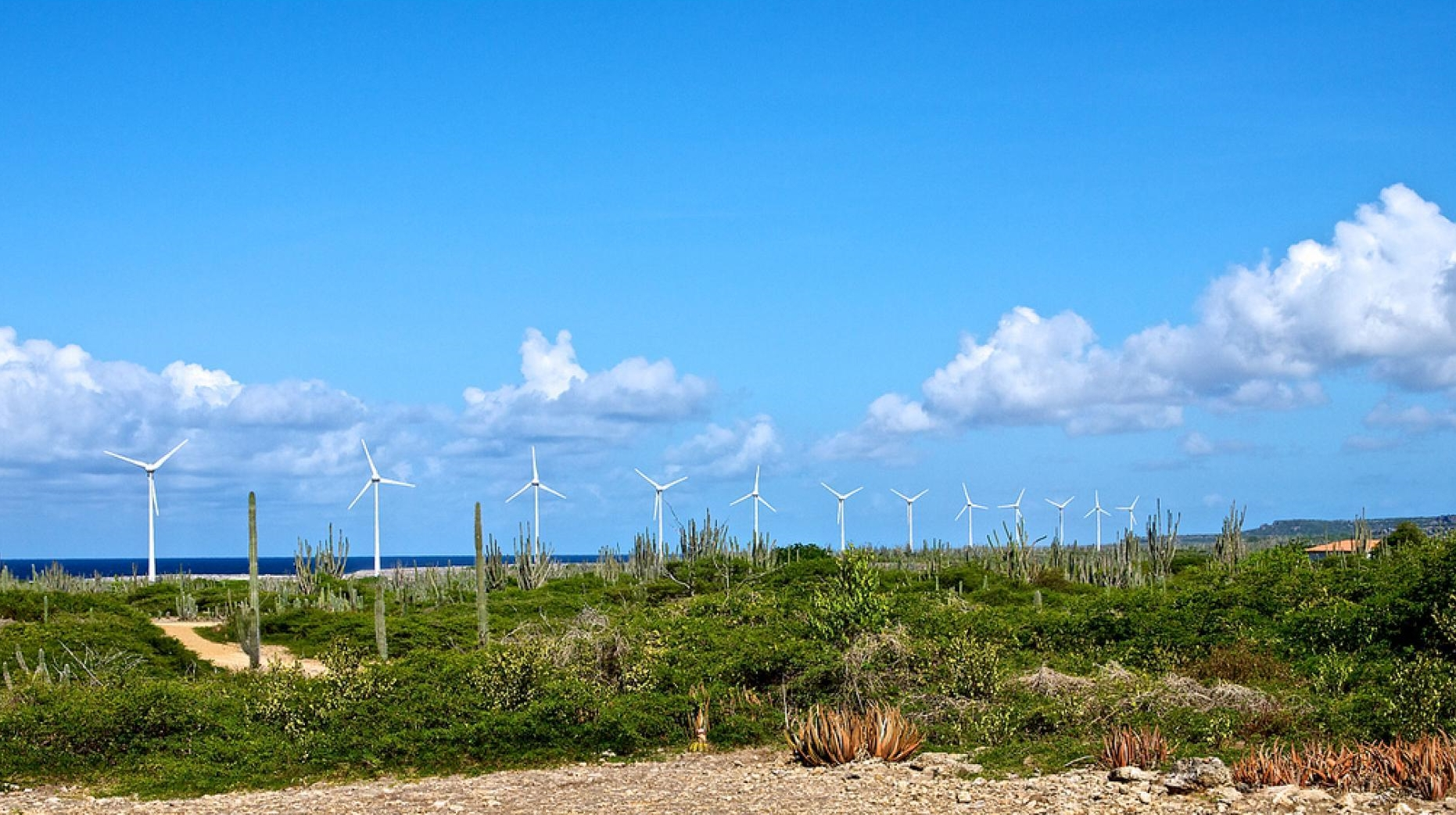The Wigton Wind Farm in Jamaica.