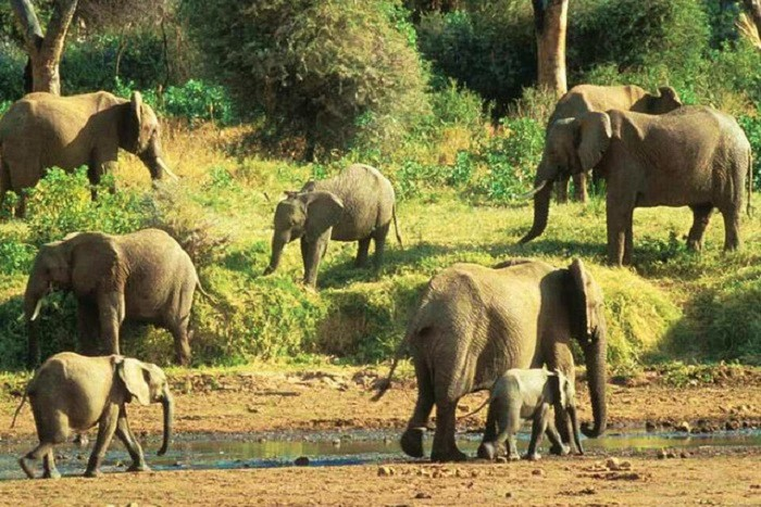Elephants in Angola  via ANGOP  (Agencia Angola Press)