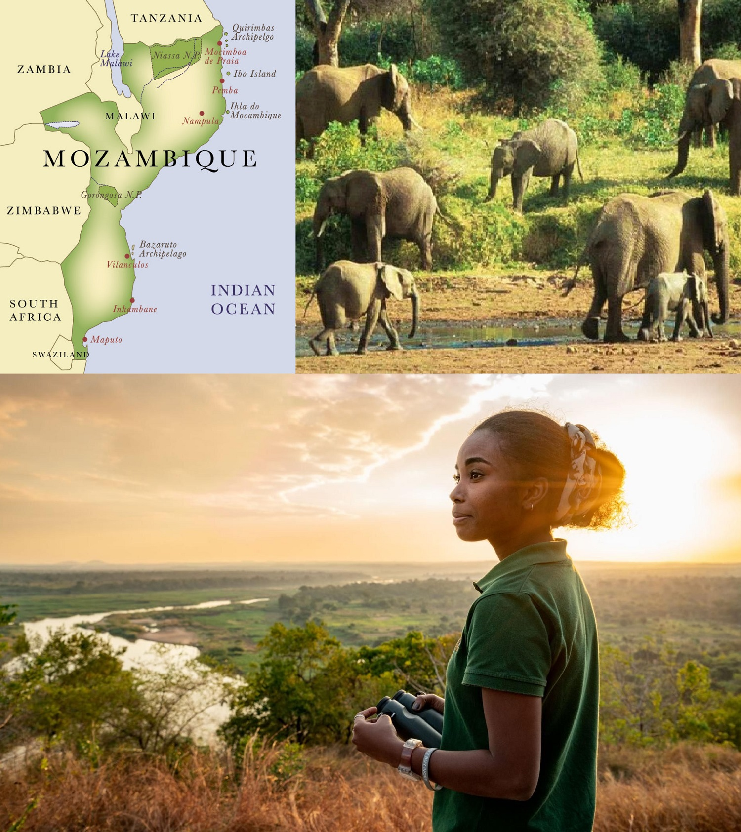 -collage-mozambique-elephant-conservation.jpg