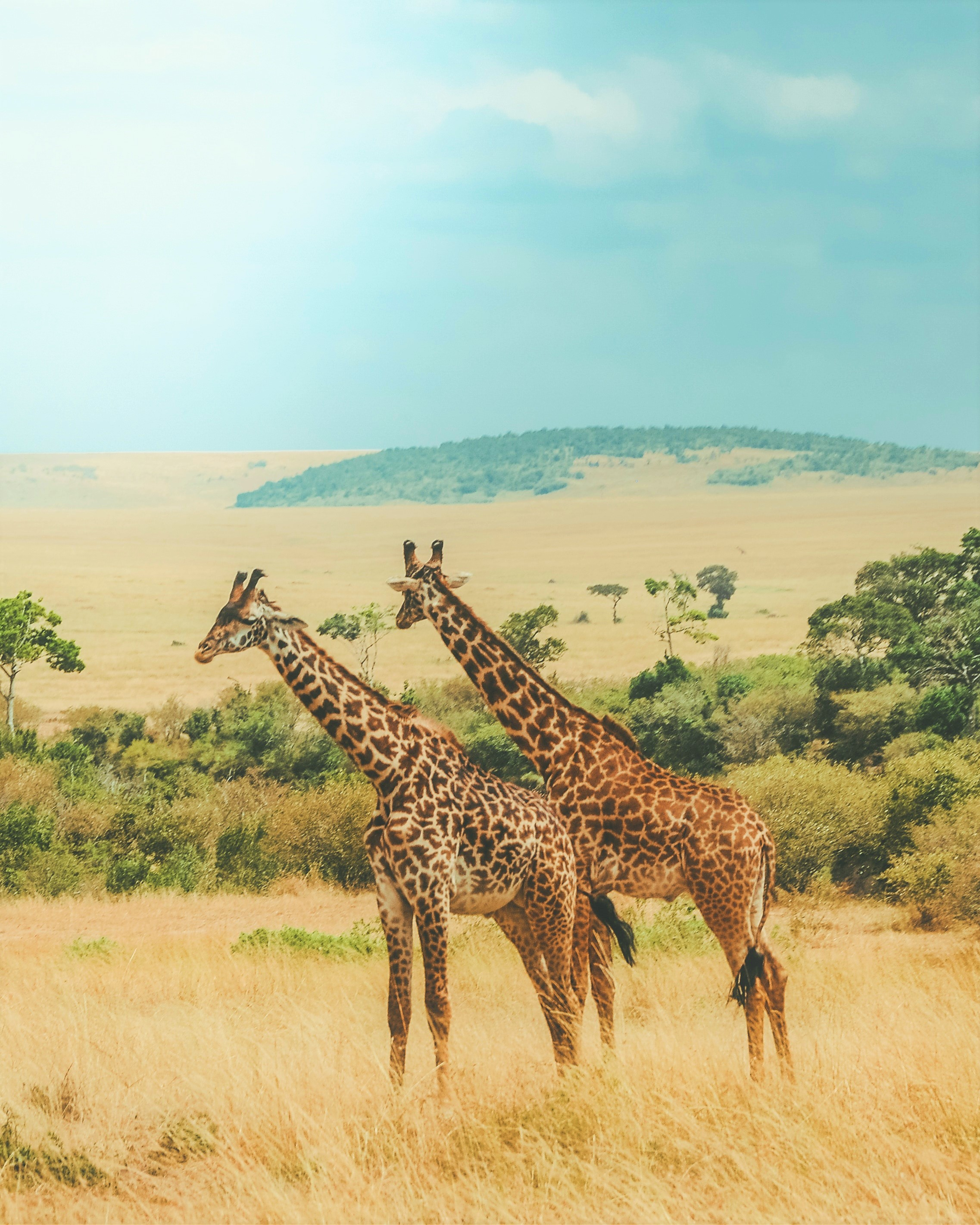 Photo by  Harshil Gudka  on  Unsplash . Masai Mara National Reserve, Kenya