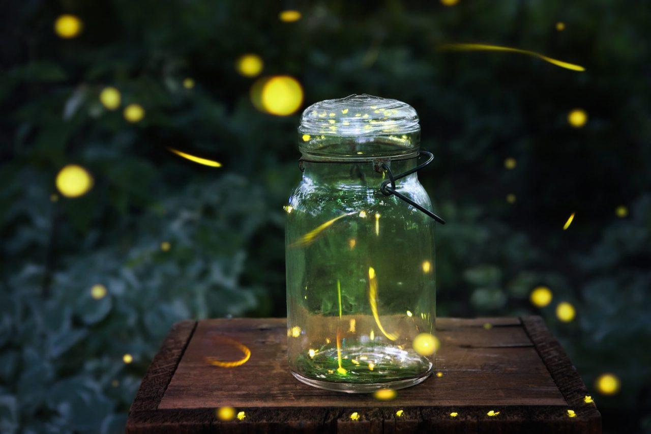 fireflies-3.jpg