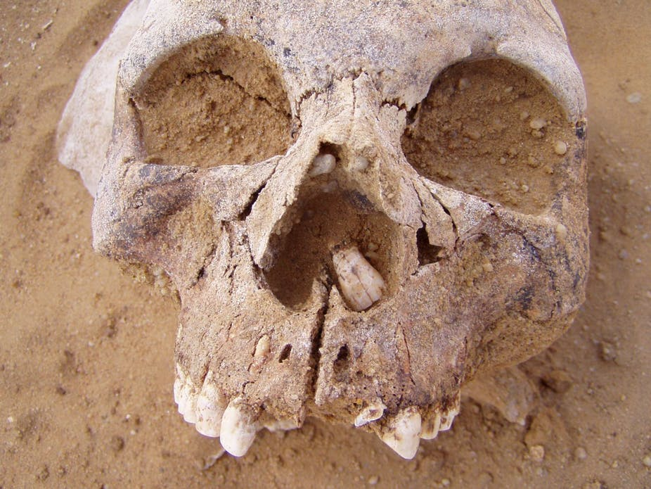 Neolithic skull. Author provided.