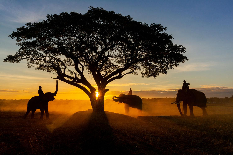 Image via Marula Gin , Namibia.
