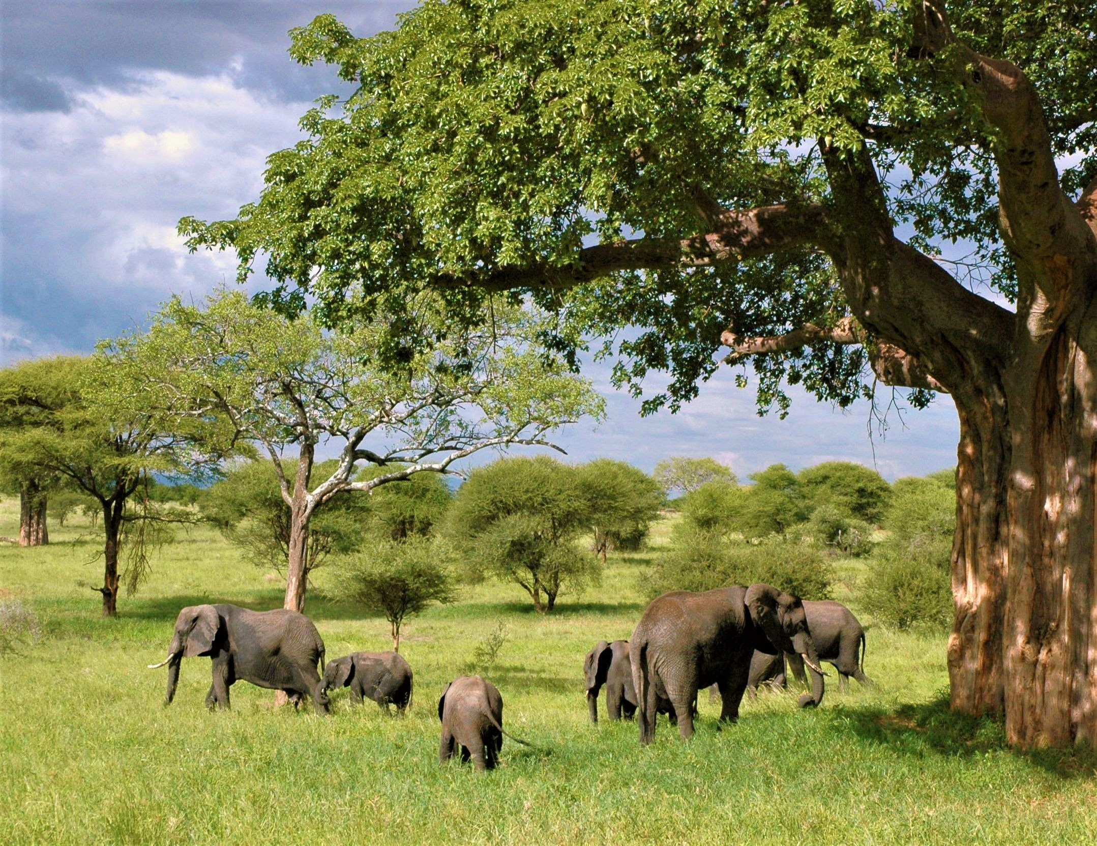 Elephants can coexist with trees..jpg