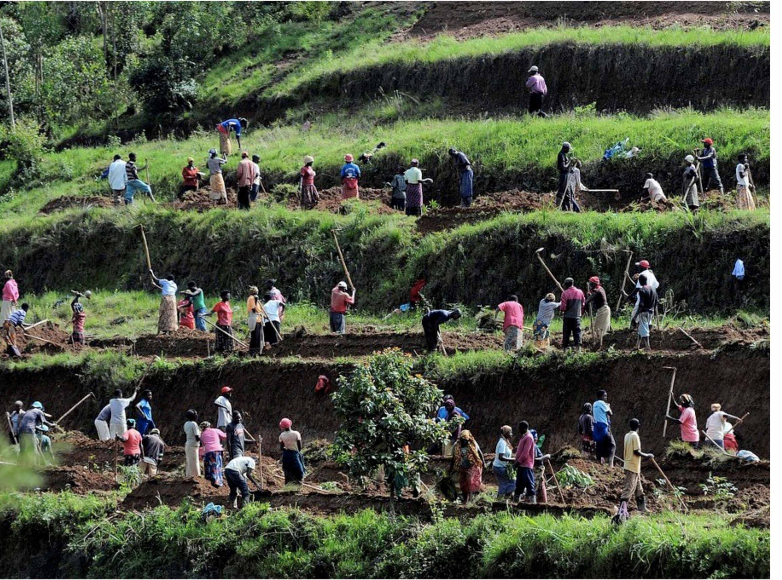 People terracing sloping land to control soil erosion.    Photo courtesy of CCAFS.