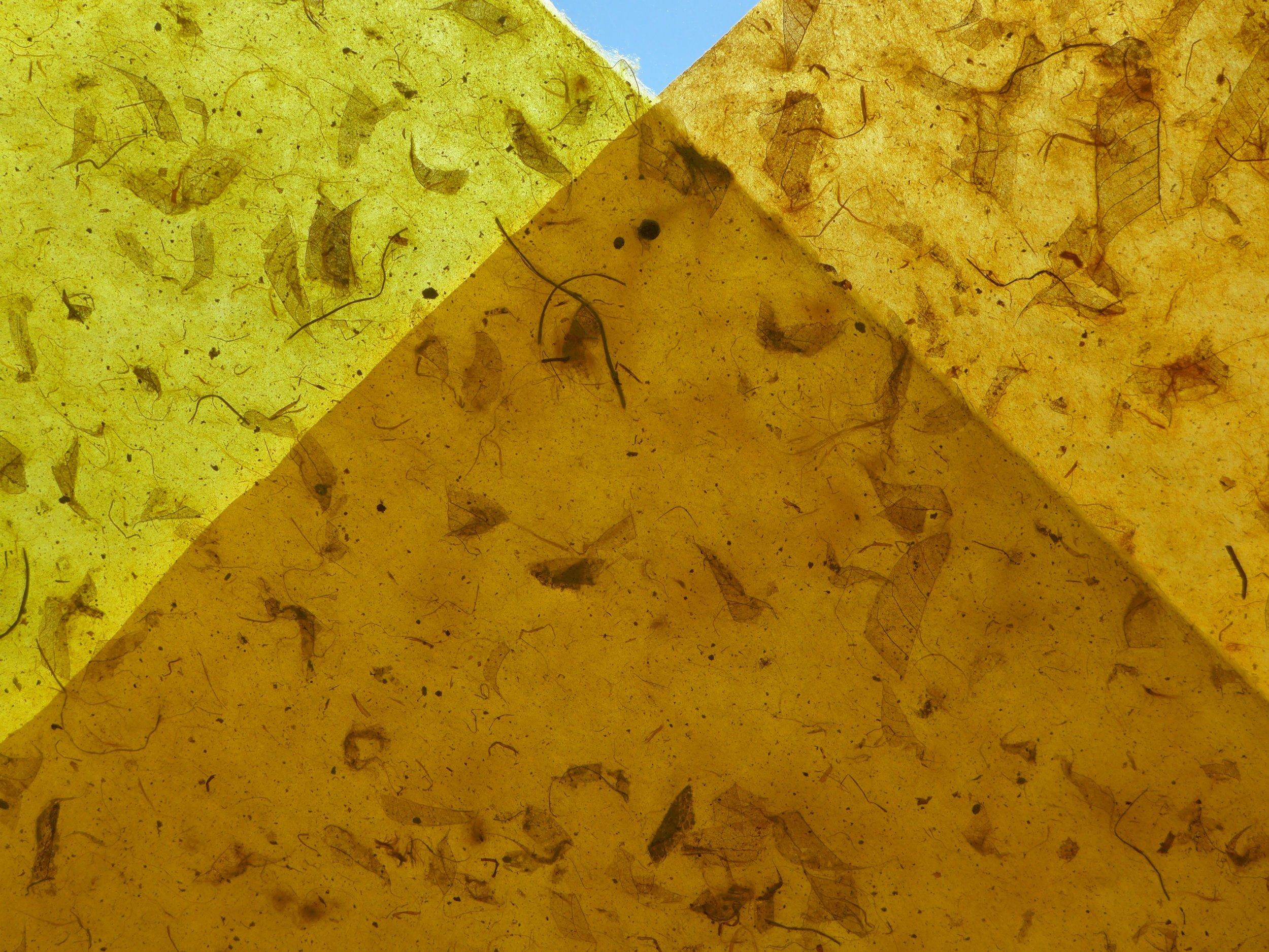 yellow orange mango copy.jpg