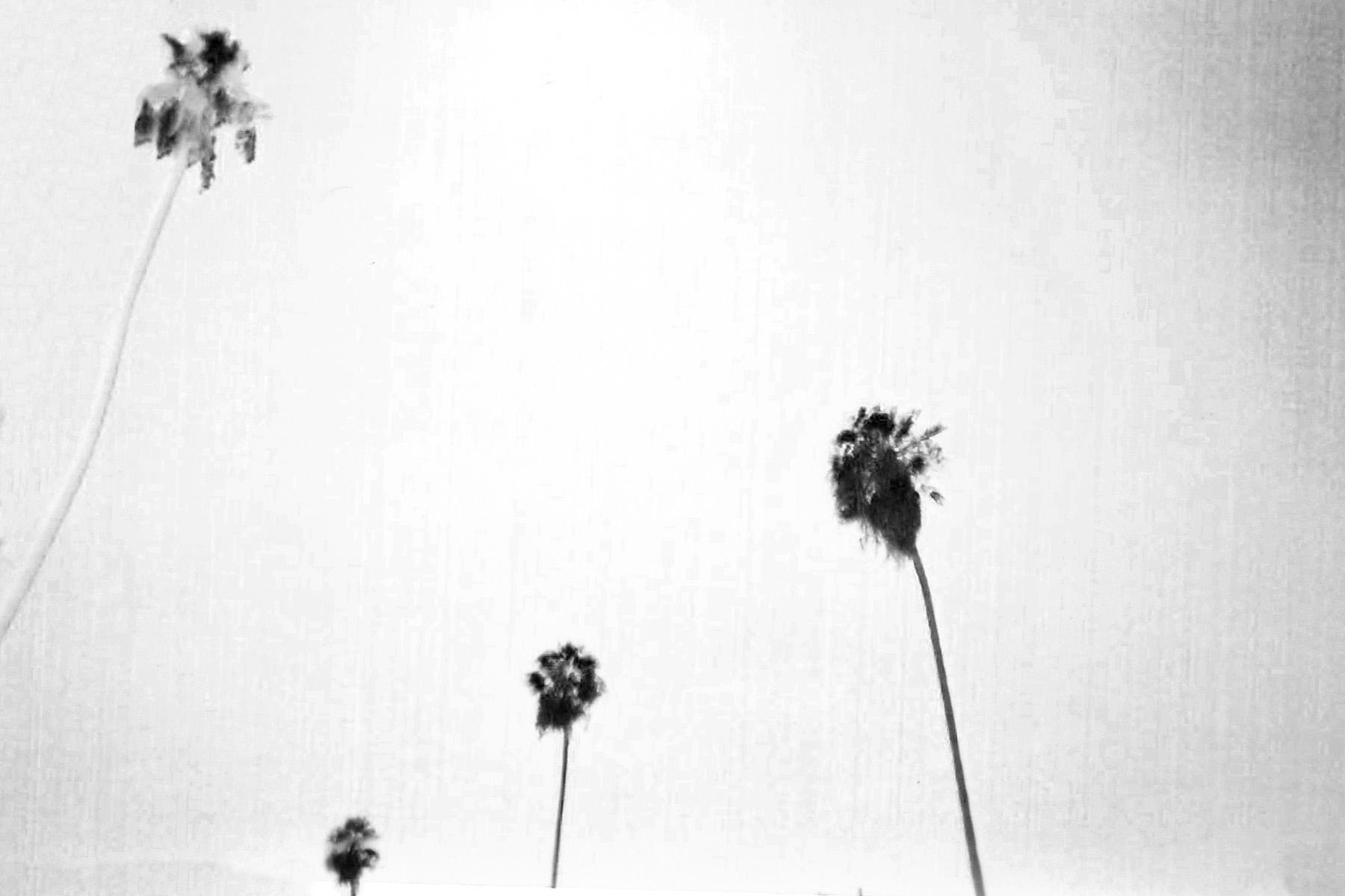 Palm-9_0003_4.jpg