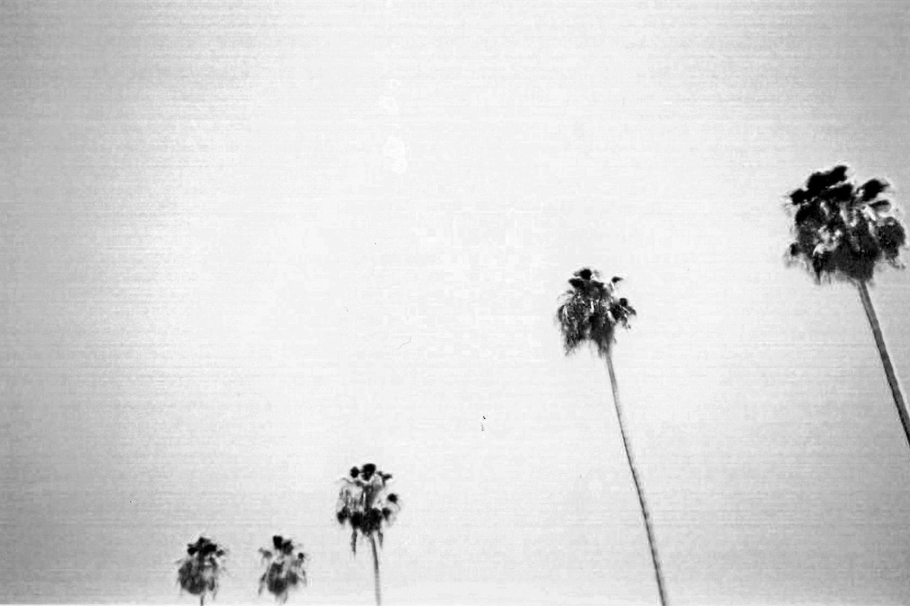 Palm-9_0004_5.jpg