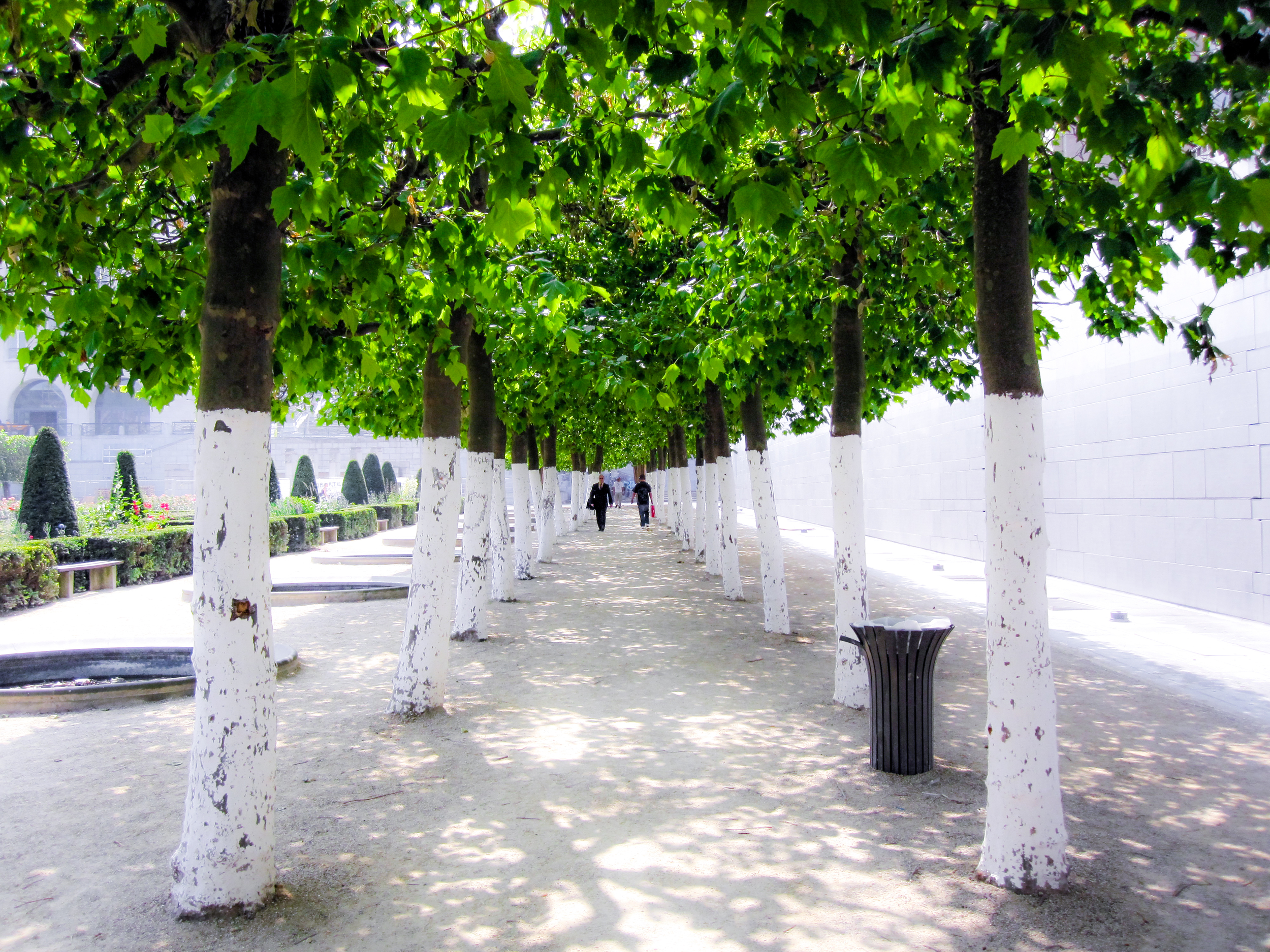 Bruxelles' Tunnel of Trees