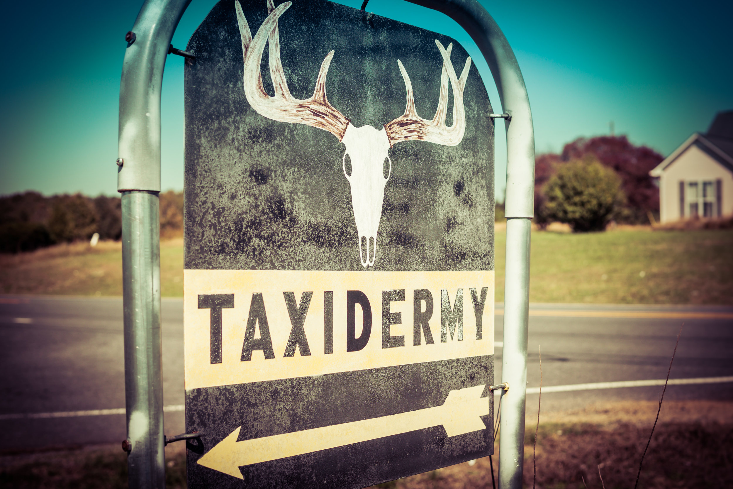 Tommy's Taxidermy
