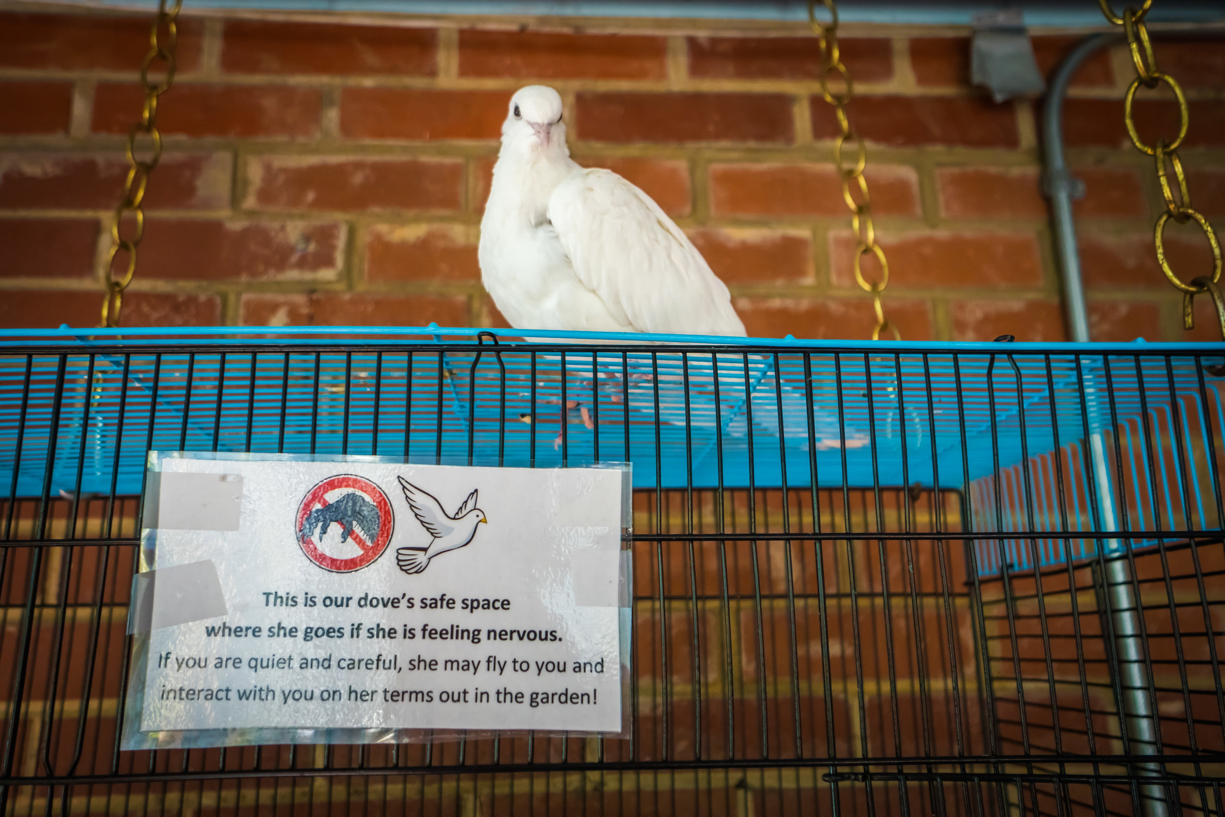 The Dove's Safe Space