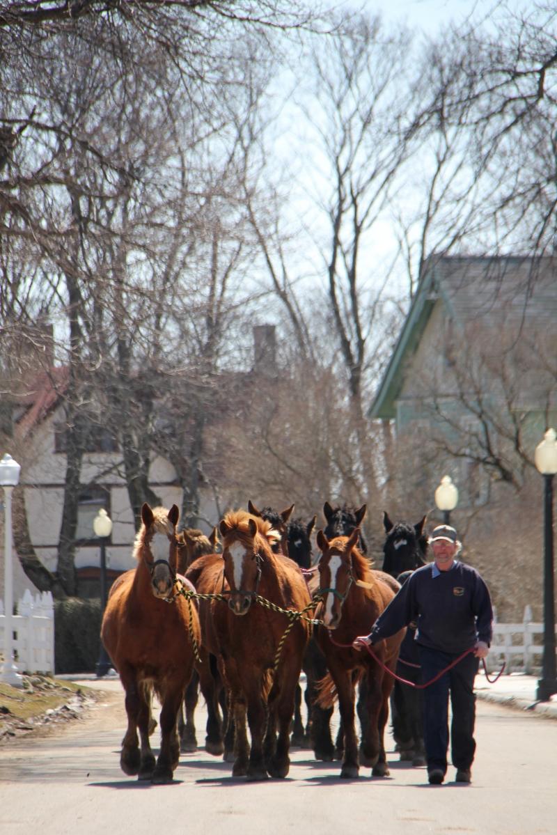 horseabcd.jpg