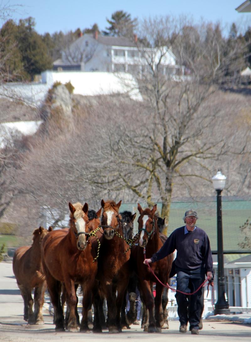horseabc.jpg