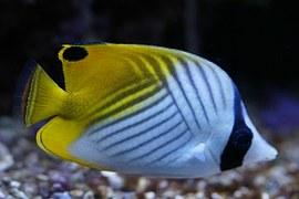 angel-fish-332117__180.jpg