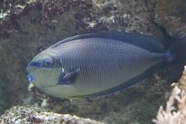 triggerfish-793378__180.jpg