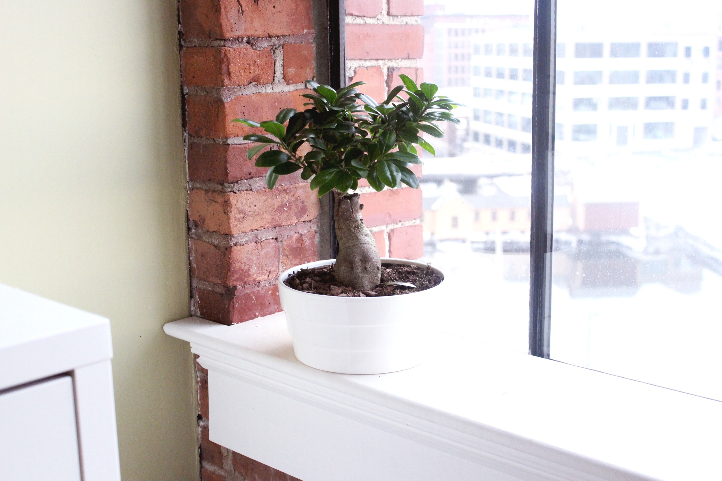 That's Judah, my Bonsai plant. He doesn't take walks and I inhale his waste (what perfect pets are made of)