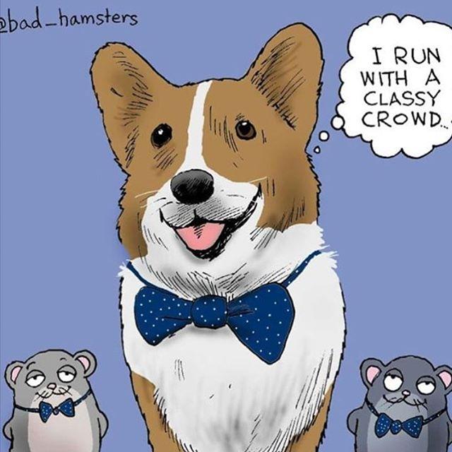 SOURCE - @bad_hamsters