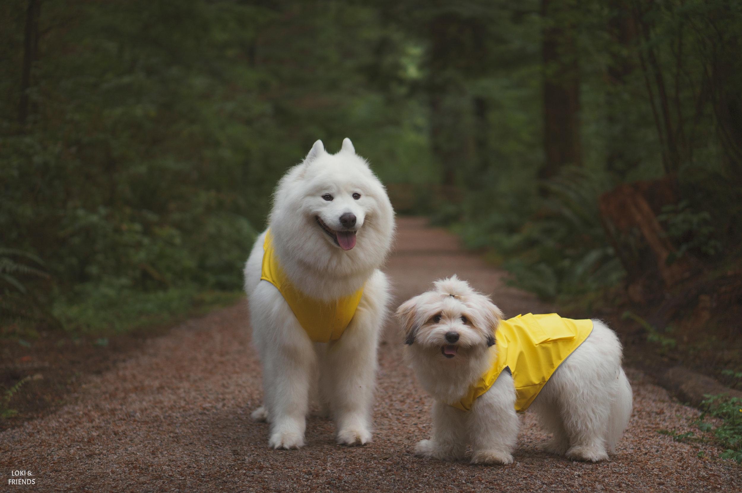raincoat (1 of 1).jpg