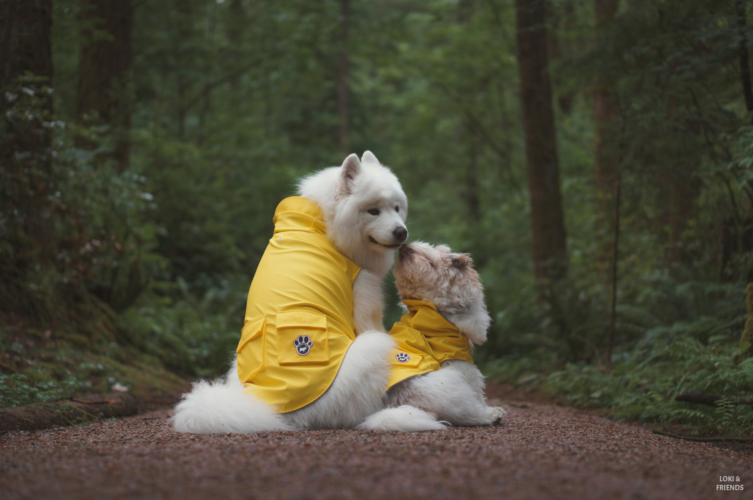raincoat (1 of 1)-3.jpg
