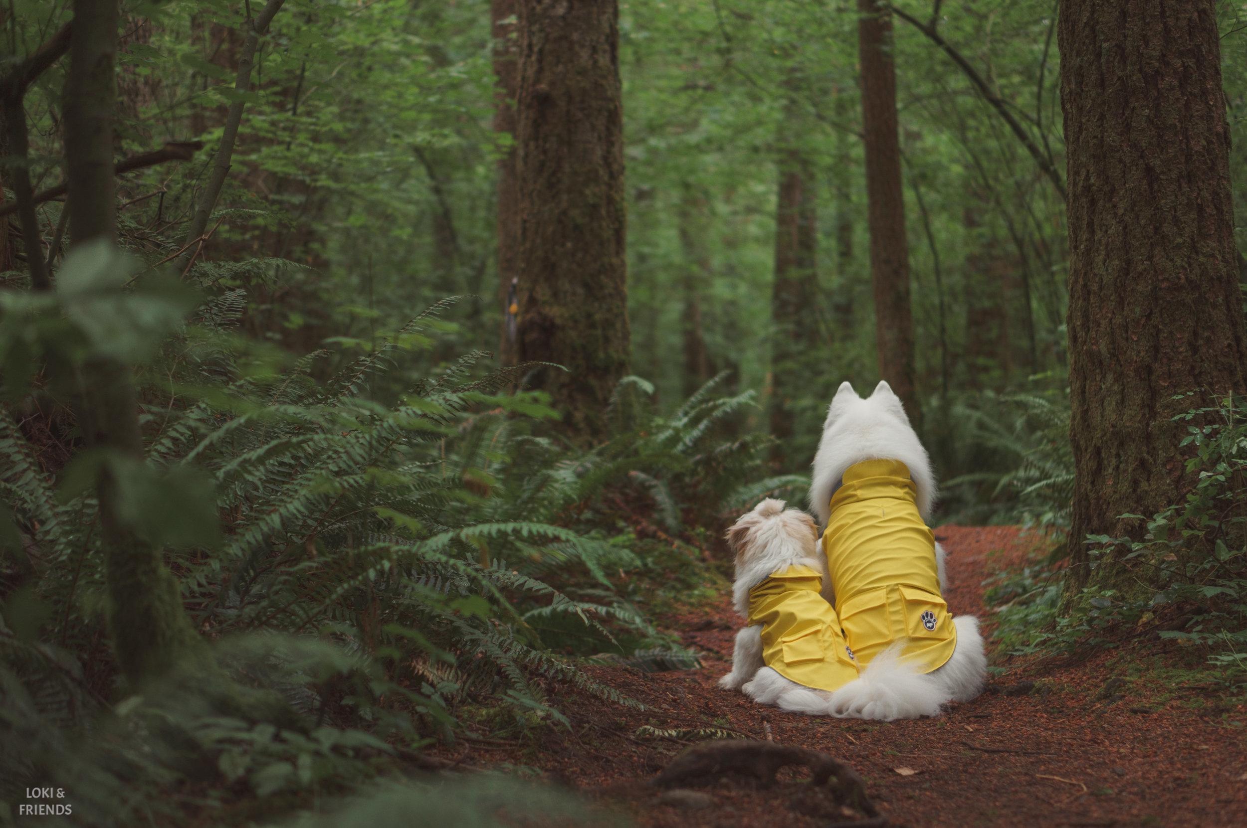 raincoat (1 of 1)-4.jpg