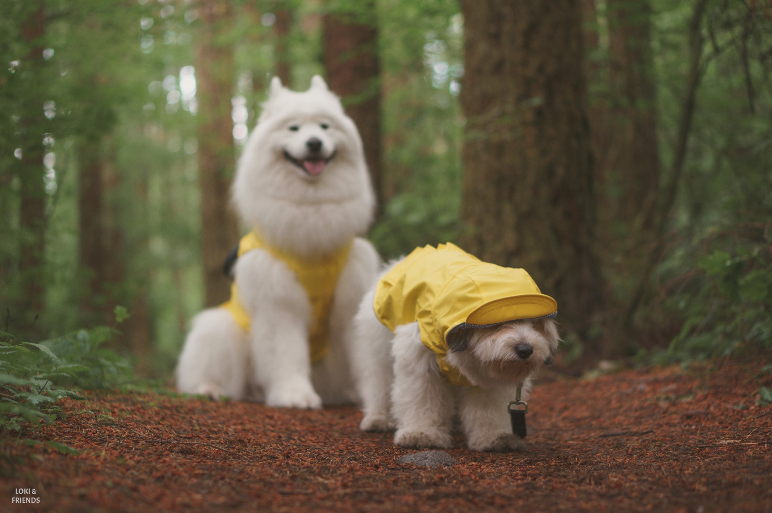 raincoat (1 of 1)-6.jpg