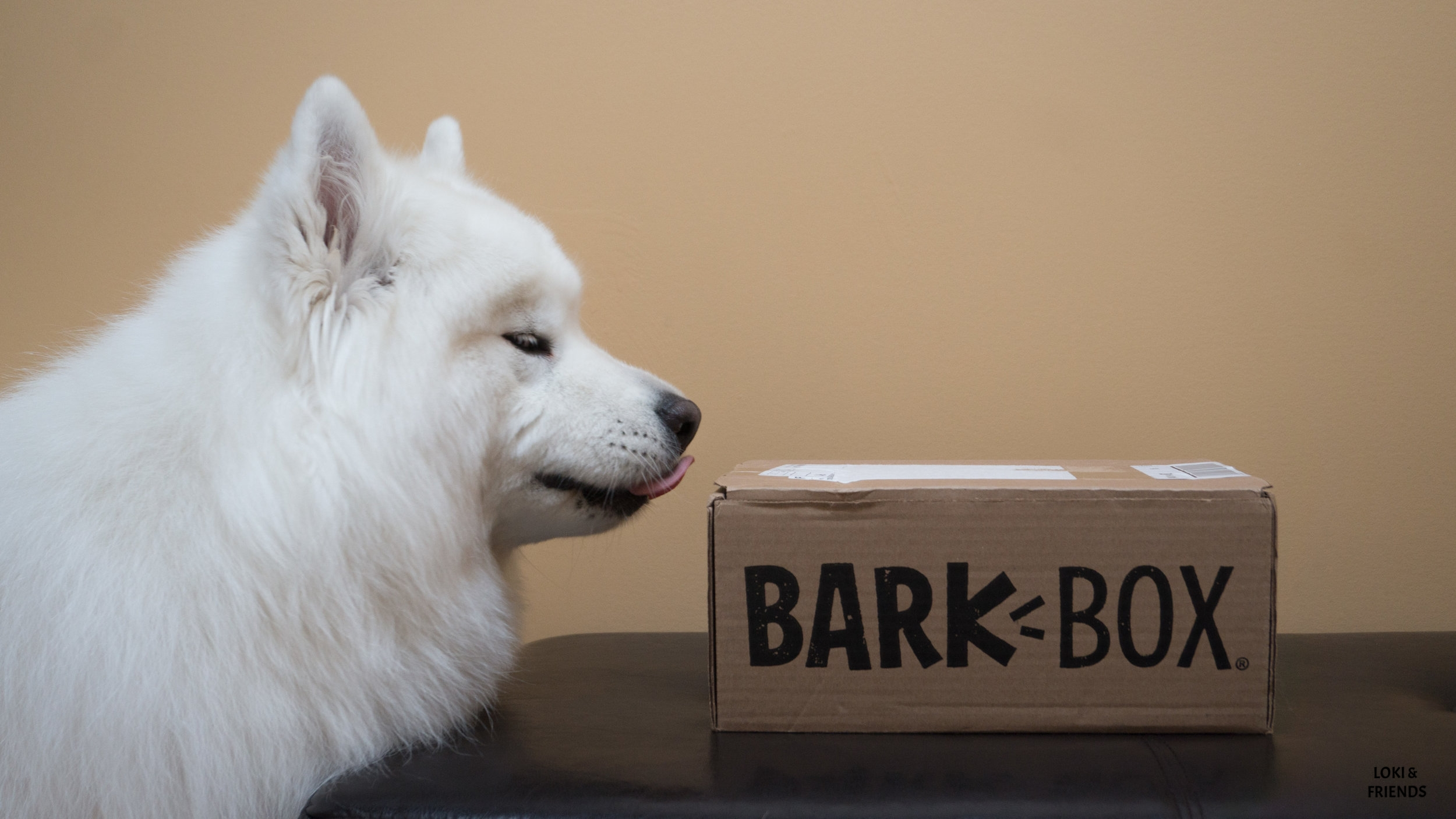 BARKBOX AUG (1 of 5).jpg