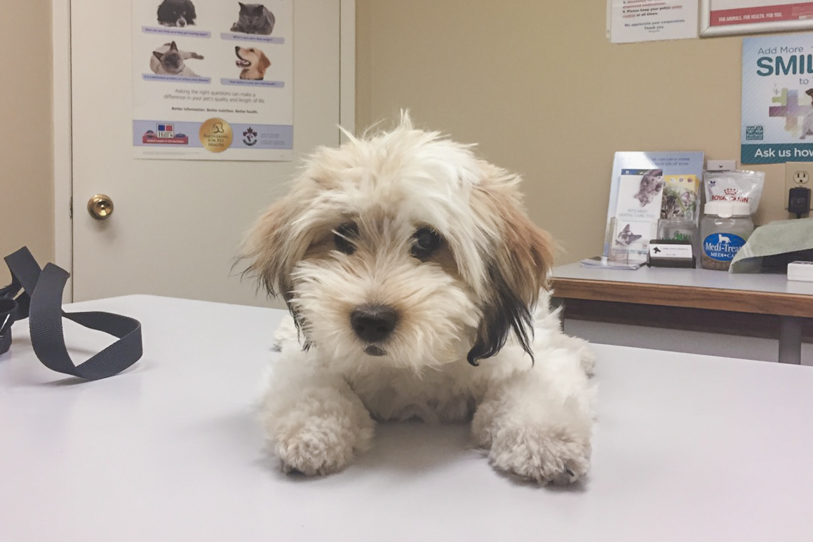4-month-old Momo visits the vet for the first time!