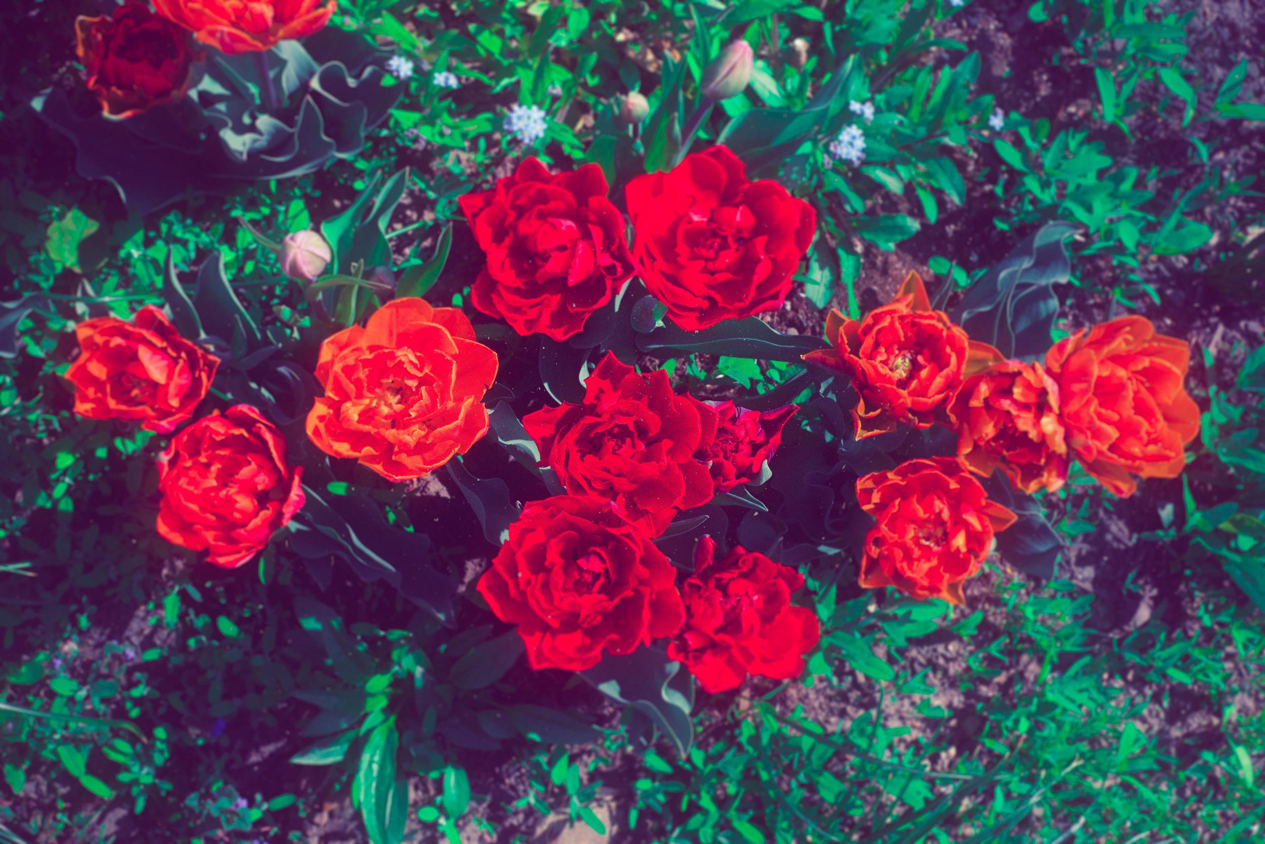 RTC-FLOWERS-1.jpg