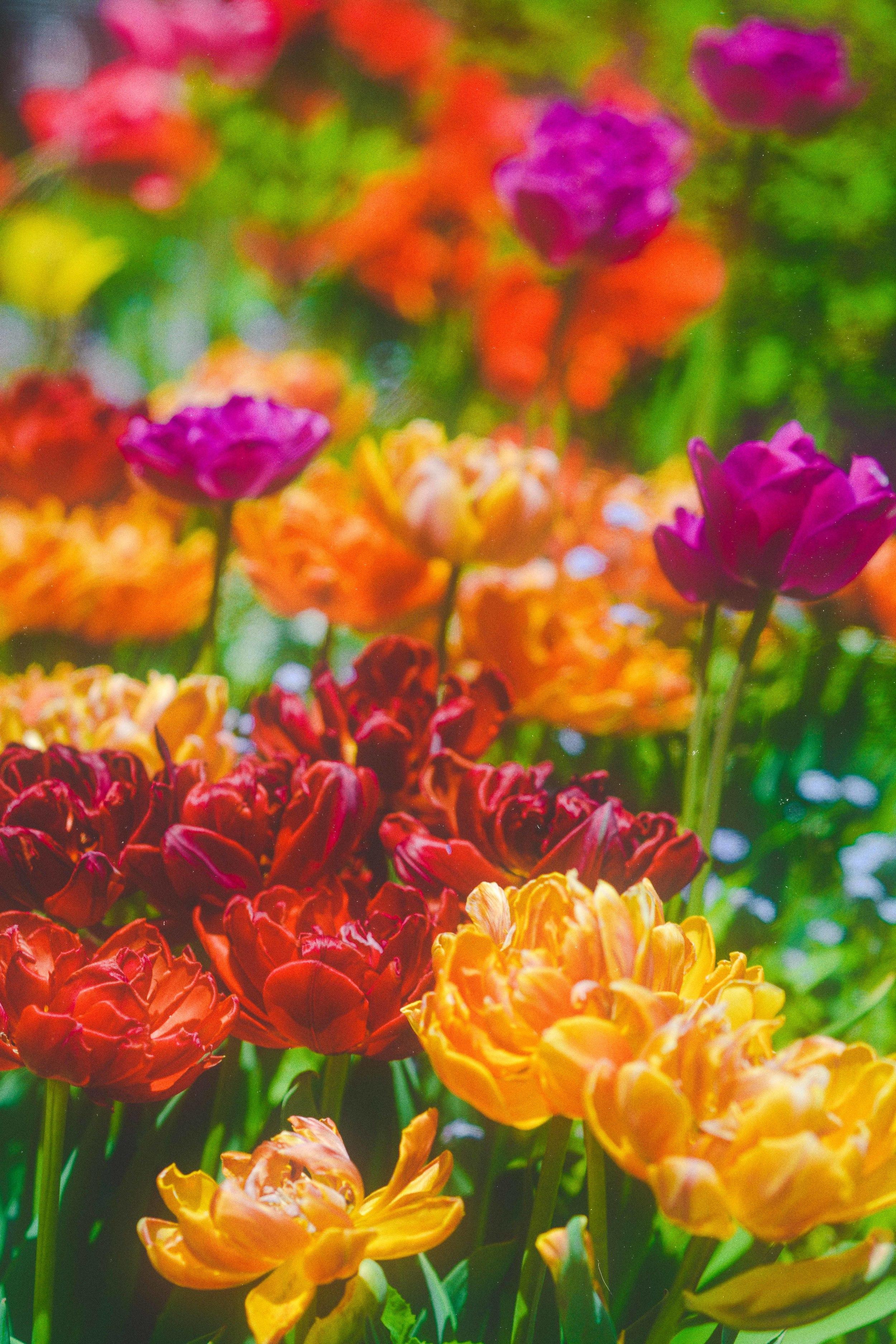 RTC-FLOWERS-5.jpg