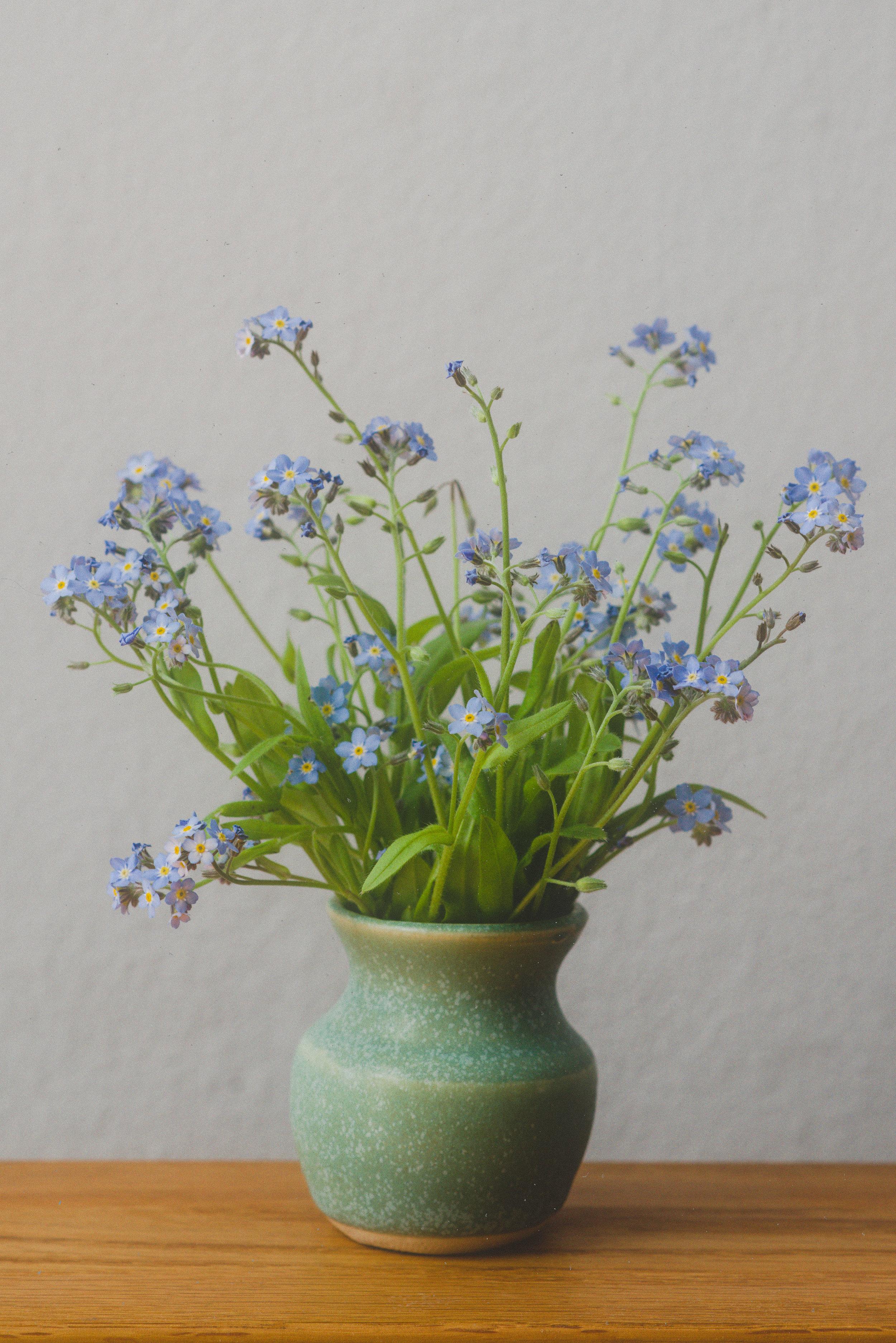 ryan thompson creative photography - lavender in tiny vase