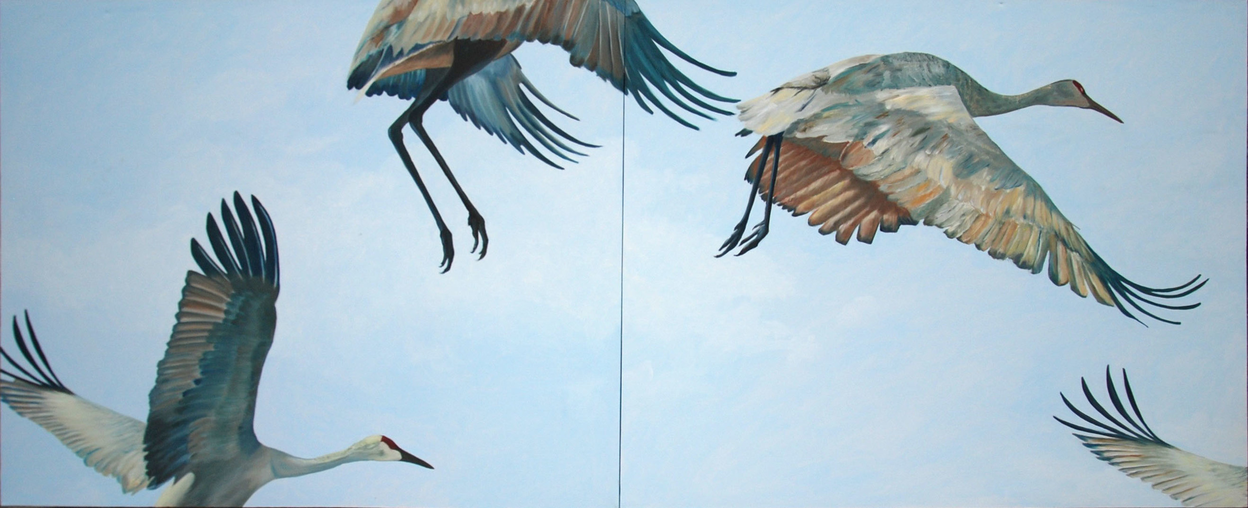 Sandhill Cranes Landing  oil on canvas; 4' x 10' on two canvasses 4' x 5' each; 2013  Purchased by Shands Hospital; in the lobby of the Shands Neonatal Cardio floor
