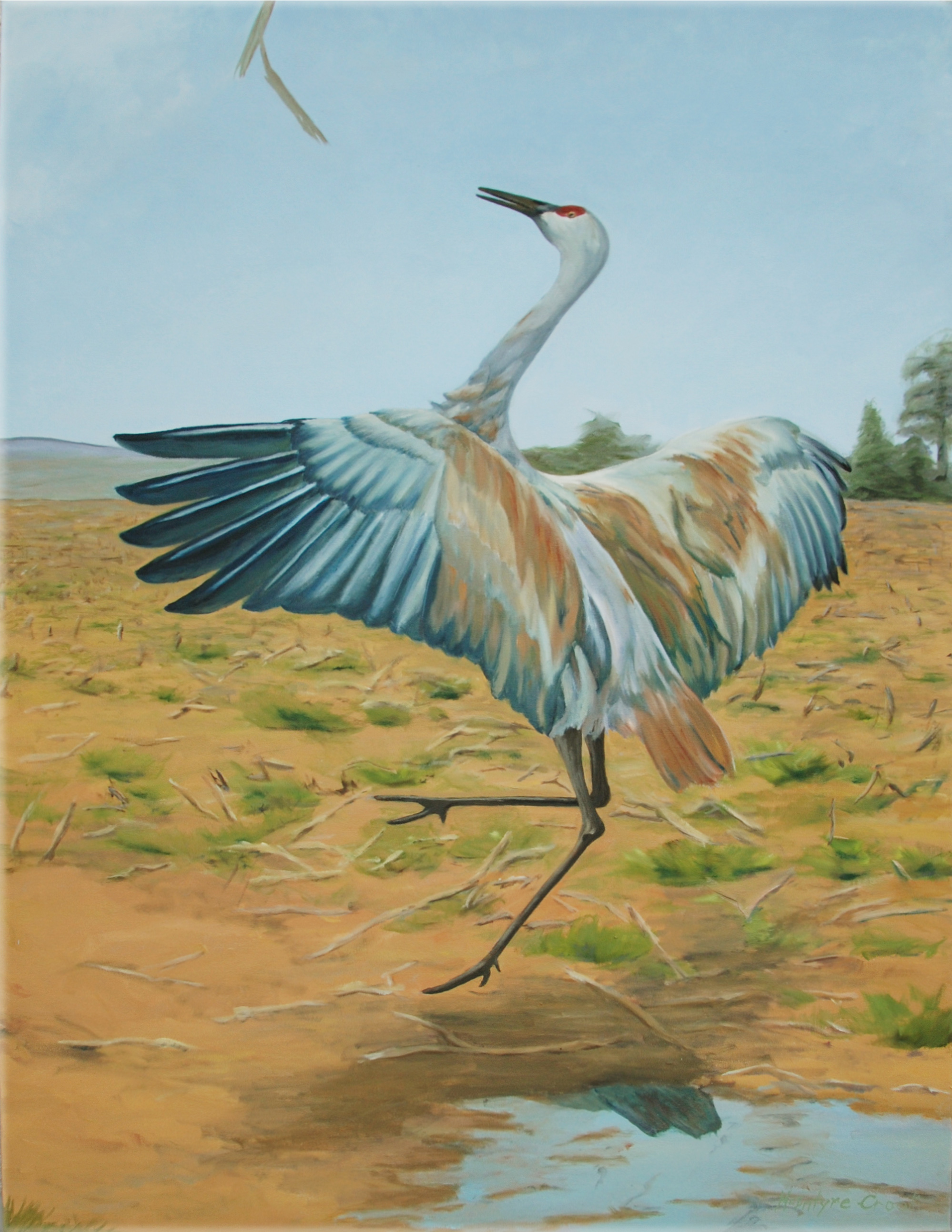 Sandhill Tossing Stick  oil on canvas; 48 x 36; 2014  $800.00  Sandhill Cranes can be quite playful. They really do toss sticks.