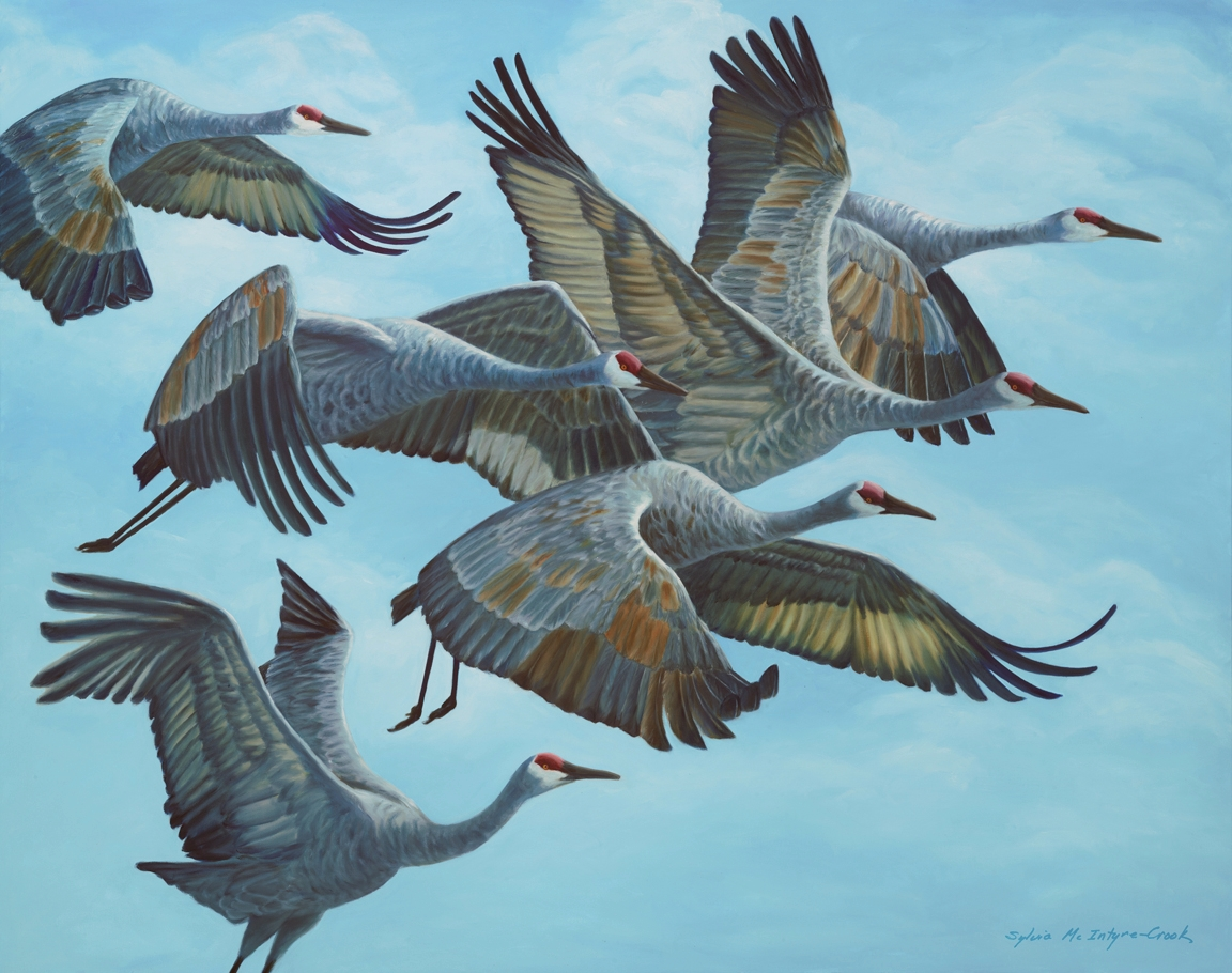 """Print: Sandhill Cranes in Flock, Aloft II  limited edition of 30; 18"""" x 23""""; Ultrachrome HDR ink;  from original oil on canvass 'Sandhill Cranes in Flock Aloft II'; 2015  $150.00"""