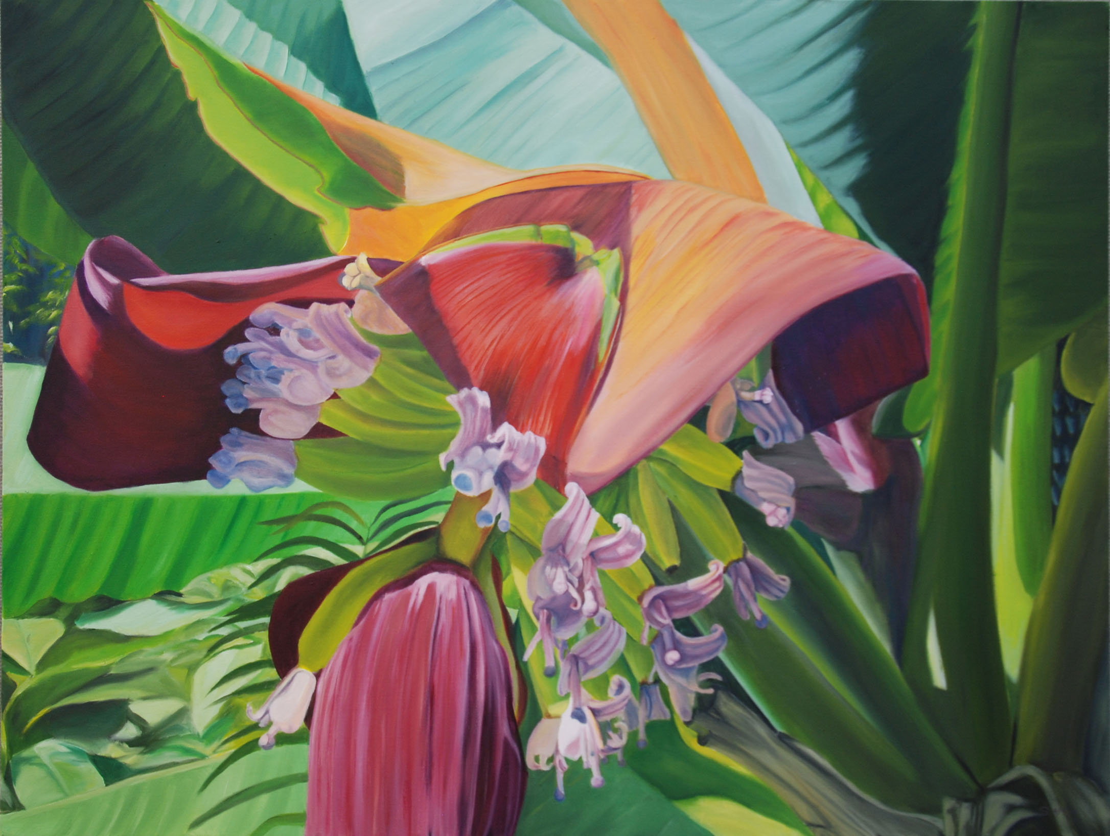 "How Light Hits a Banana Blossom  oil on canvas; 30 x 40"" 2016  sold"