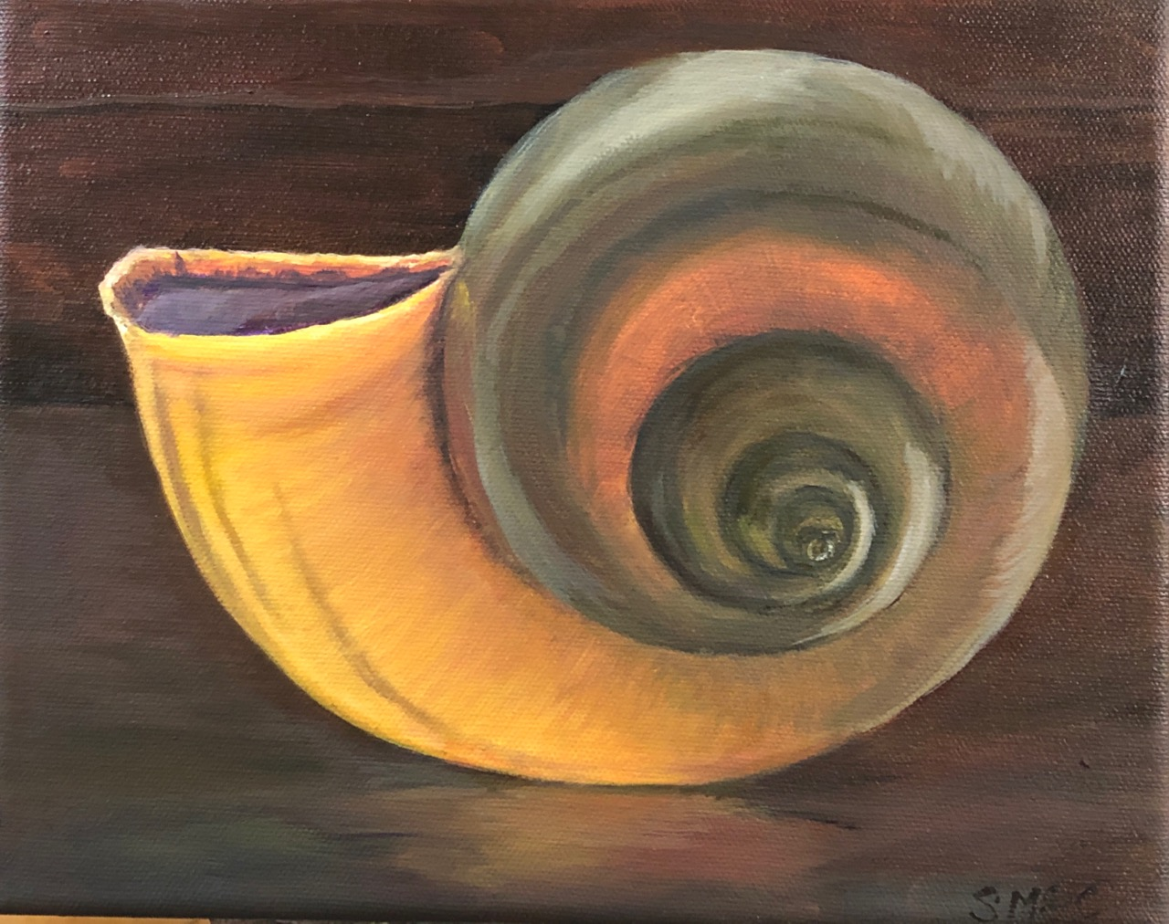 "Apple Snail Shell  in late afternoon light  oil on canvas; 8""x10""; 2019  GFAA donation"