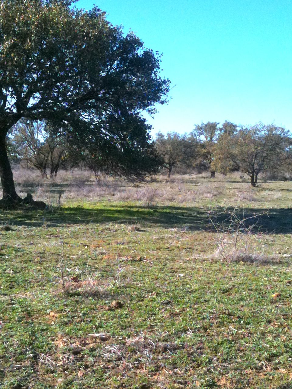 TRACT #5 4.13 ACRES $57,900  EXISTING 21 GPM WELL