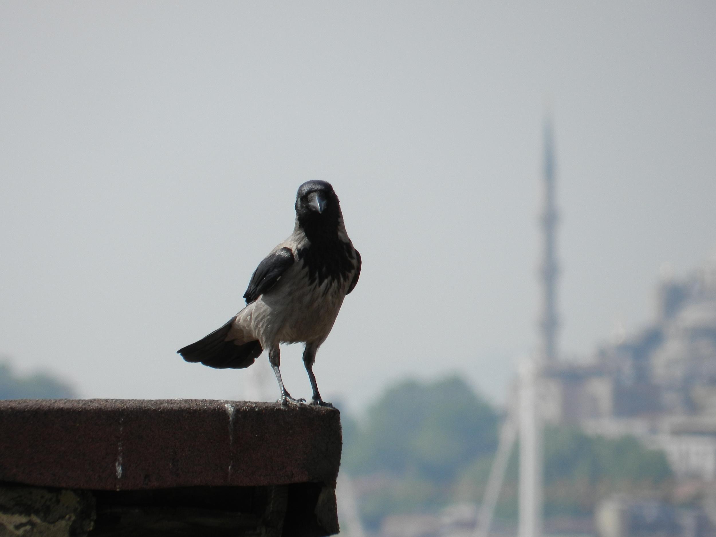 Turkey 2013 4 008.JPG