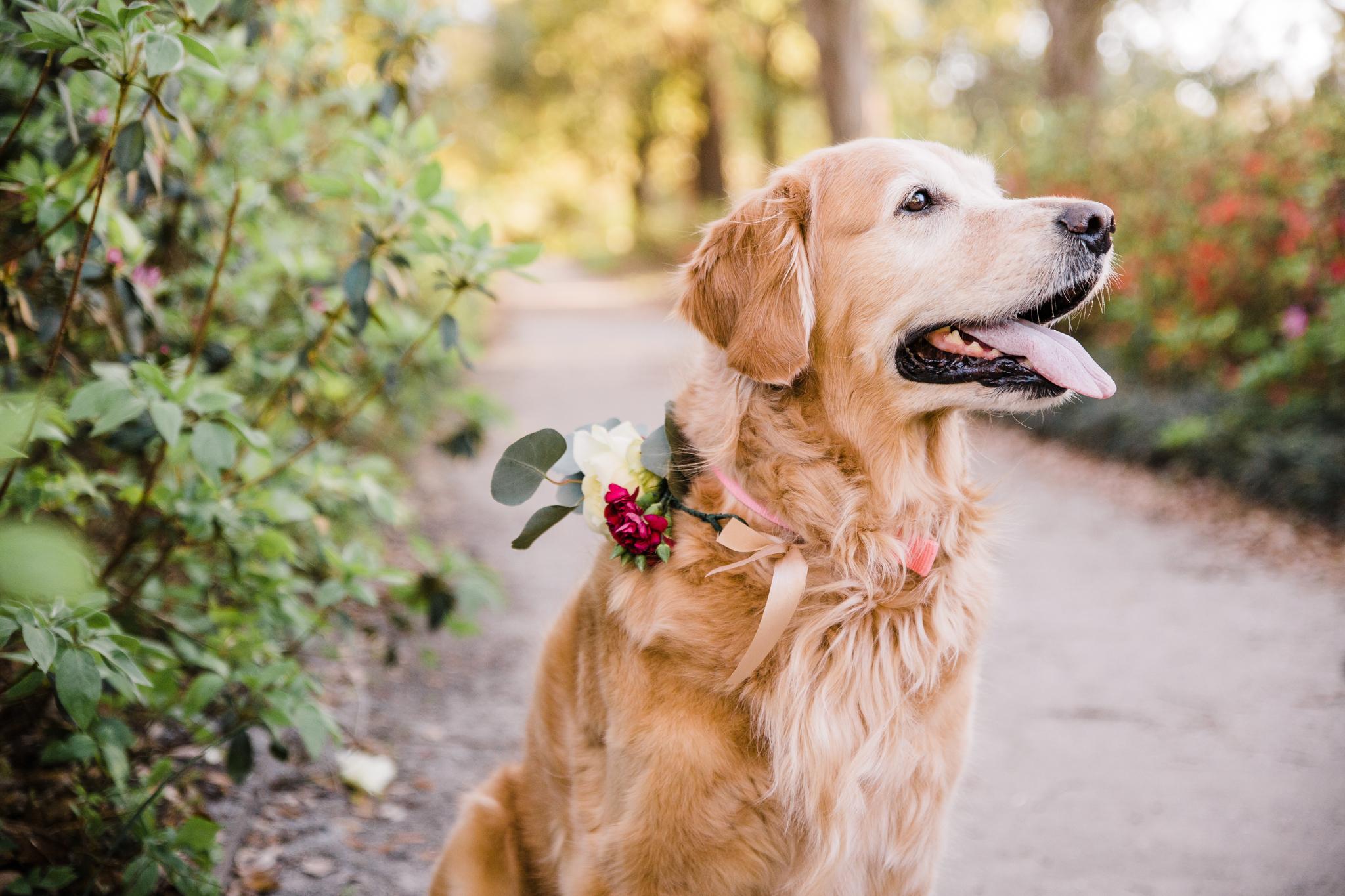 charleston pet photographer
