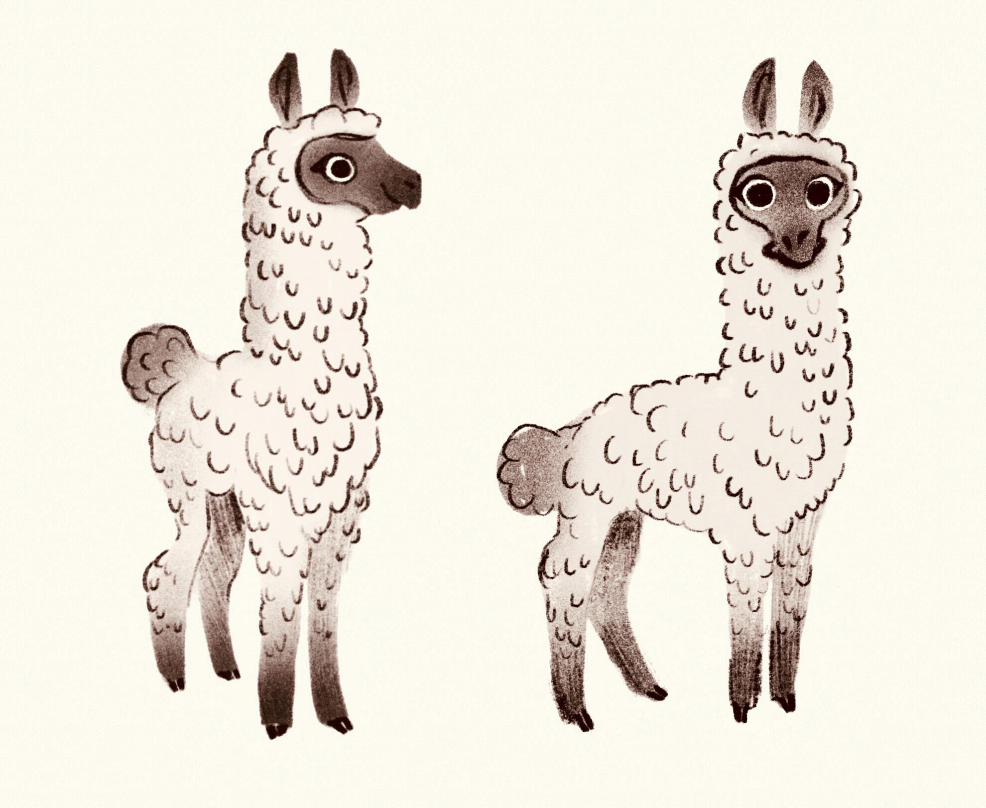 1Karly Catto Llama Sketches.jpg