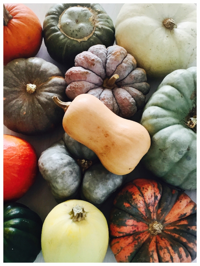 The winter squash varieties I currently have sitting on my kitchen table.