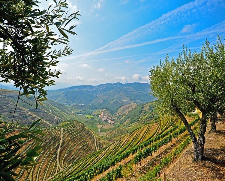 enticingdouro_portugal_pinhao_vineyards_ss_278016815_dailyprogram.jpg